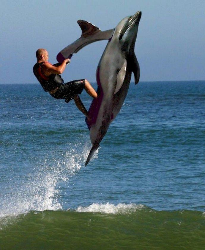 jet ski dolphin